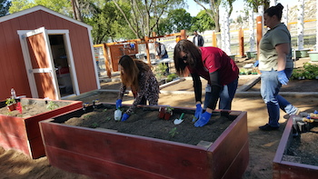 The City of Perris Community Garden Demonstration Center. Photo courtesy of the City of Perris.