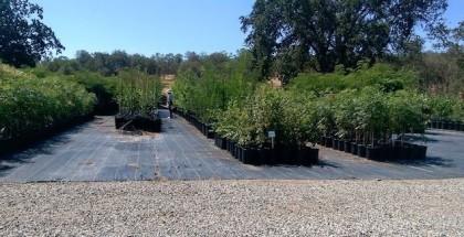 Incredible Edible Community Garden in Upland, CA
