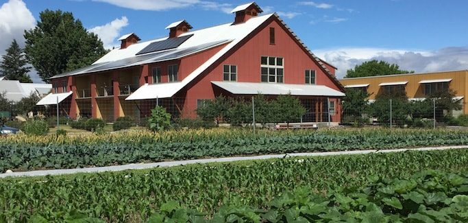Innovative Neighborhood Farm Adjacent to Housing Complex Increases Food Access and Grows Community
