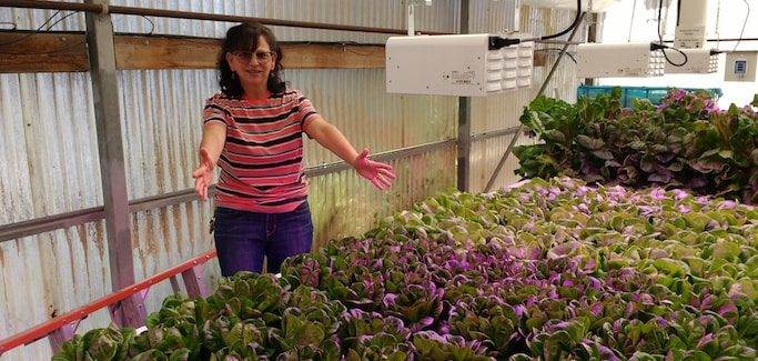 SoCal Community College Hort Professor Prepares Students to Work in Indoor Farms of the Future