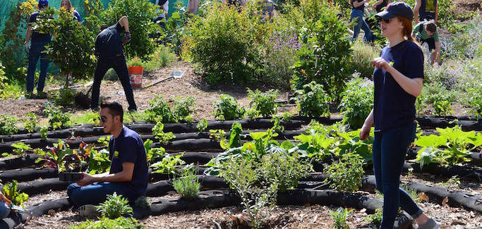 Episcopal Diocese Plants Seeds of Hope to Address Food Insecurity in Southern California
