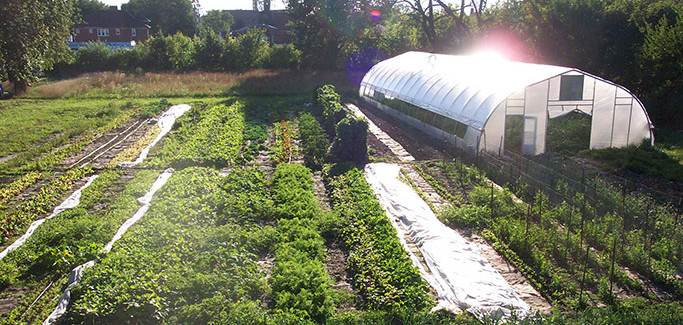 Study Finds Two Thirds of Urban Farmers Have a Social Mission that Goes Beyond Food Production