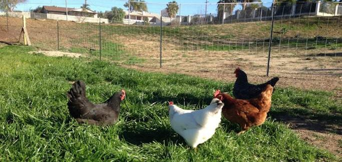 'Beyond Organic' Farm Emerges in Riverside's Glen Valley to Seize Upon Local Food Opportunity