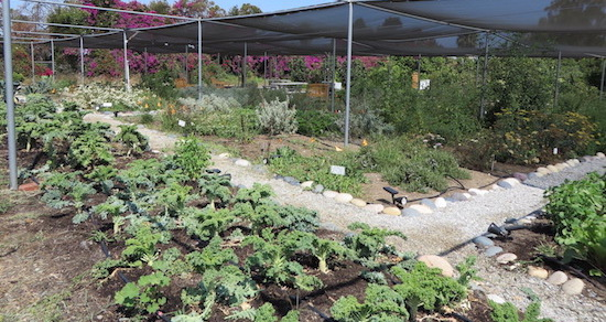 Vacant Lot Turned Urban Farm Transforms Community, Increases Food Access